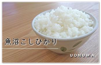 魚沼産こしひかり一般米・贈答米